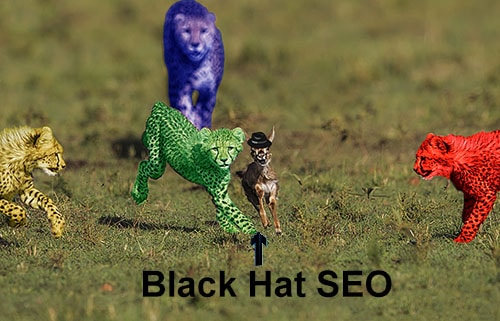 Black Hat SEO deer running from Google leopards