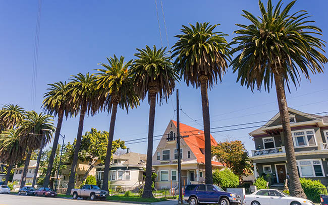 Row of houses with palm trees in San Jose.